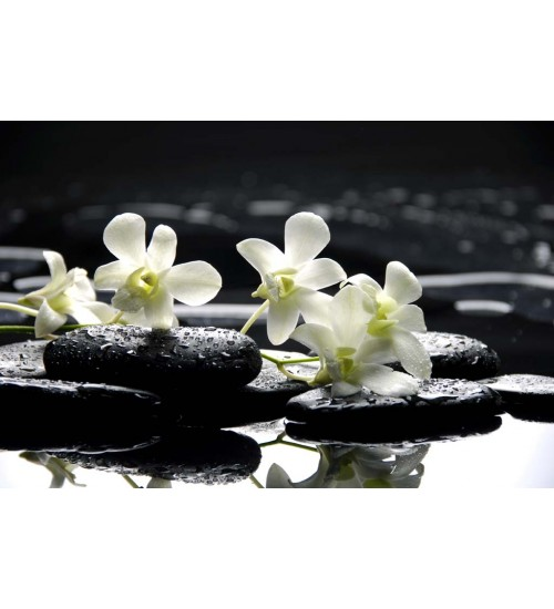 Çiçek Tabloları (1)_1